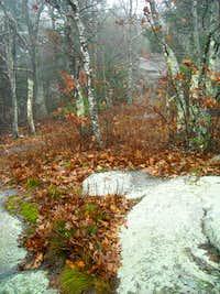 The Scenic Trail