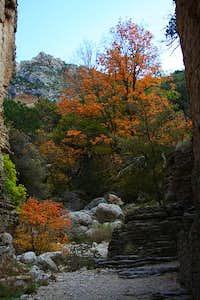 Pine Spring Canyon