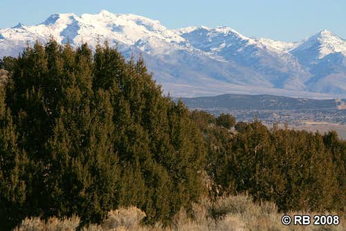 Juniper woodlands and Ruby Mountains