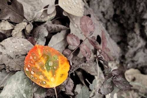 One Leaf Many Colors
