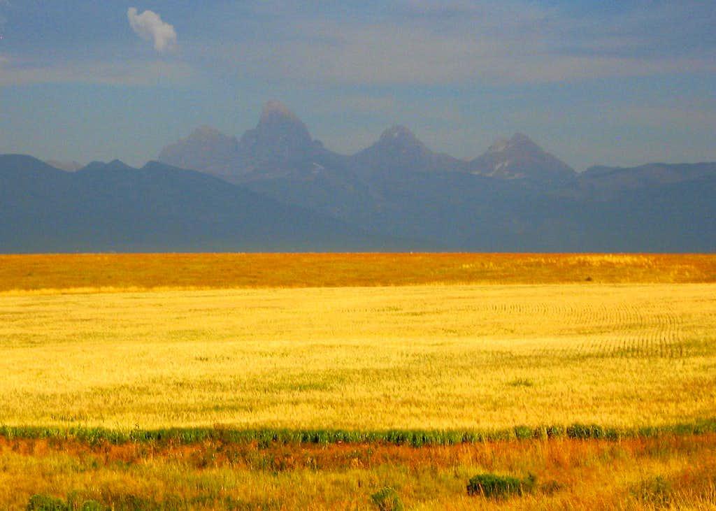 Wheat Fields and Teton Range