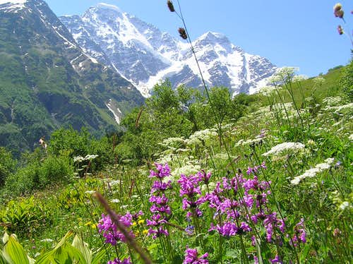 A beautful meadow