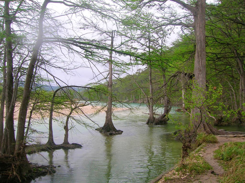 Cypress in the Frio