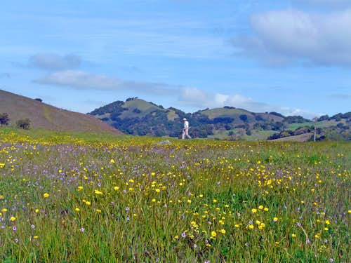 Burdell Mtn. Open Space