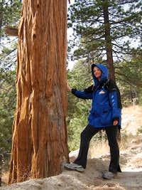 My friend the incense cedar