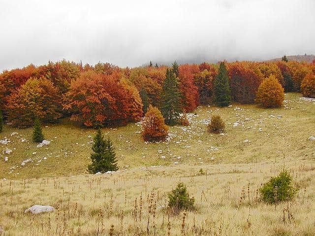 Fall on the huge undulating...