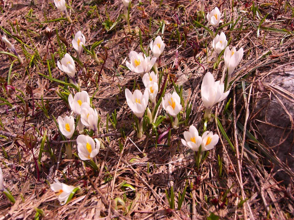 Kleine Reibn: Spring is coming ....
