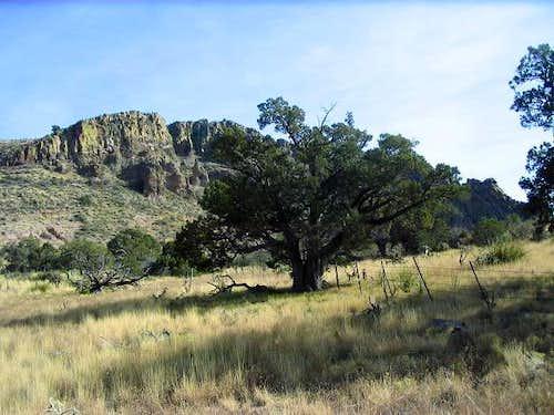 Bryce Mountain