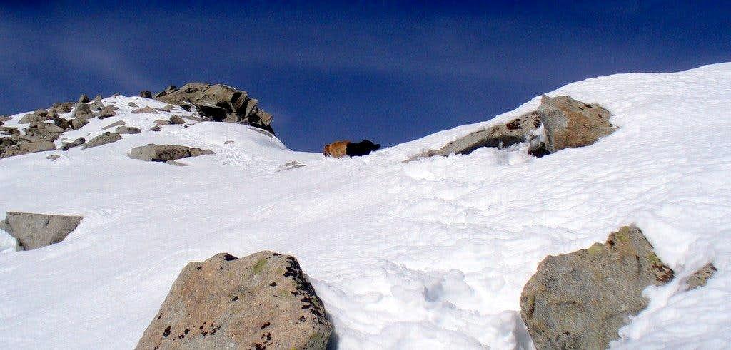 Last section of the summit  ridge