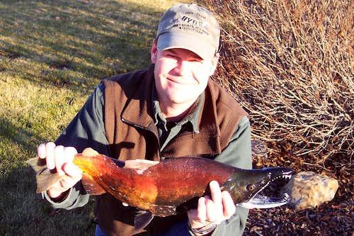 Kokanee Salmon