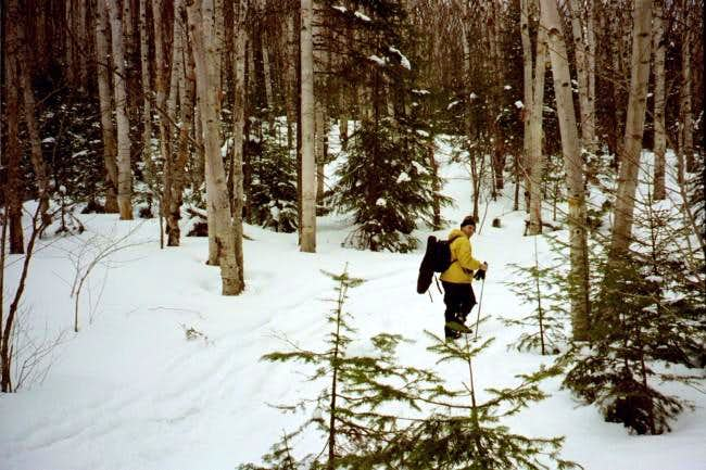 Lower woods of the Algonquin...