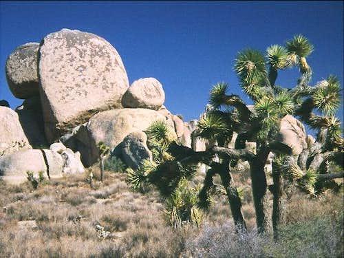 Granite boulders and Joshua...