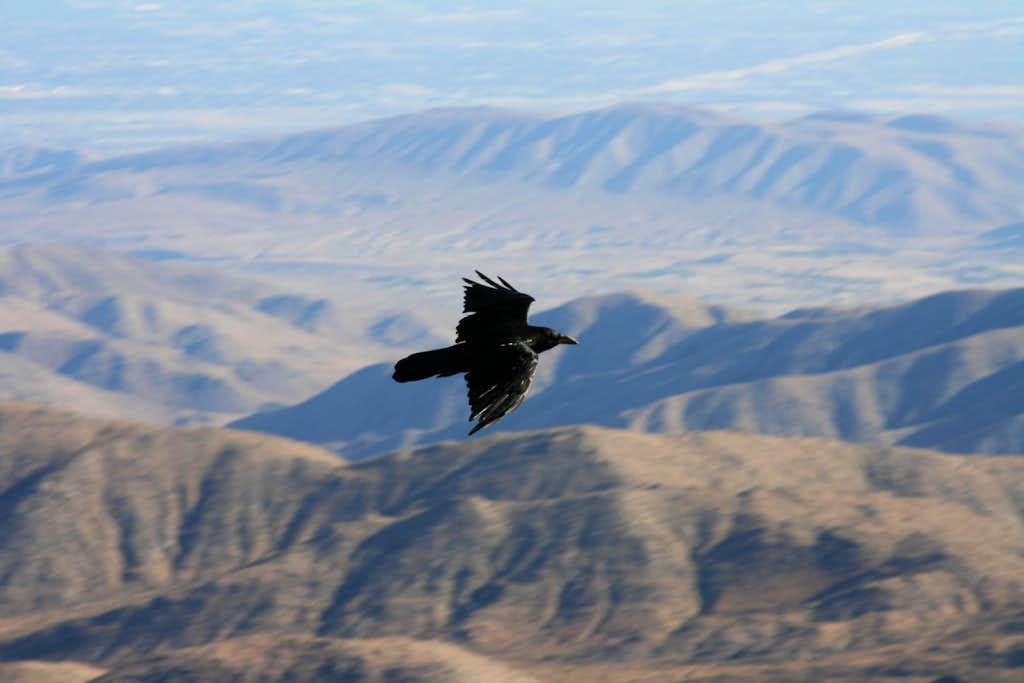 A Raven at Keys View