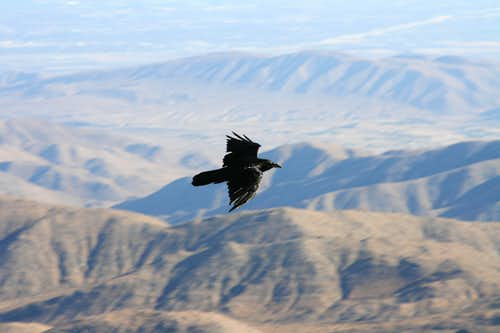 A Raven at Keys View