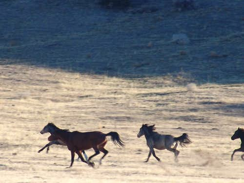 Wild Horses on Cedar Peak