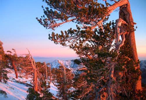 Baldy sunset - trees