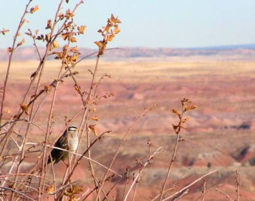 Painted Desert Bird