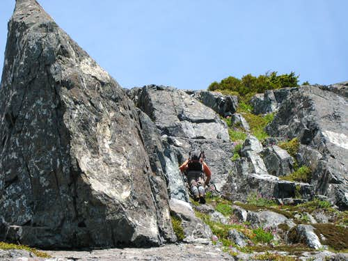 Exploring Northern Vancouver Island II: Frustration on Conuma Peak
