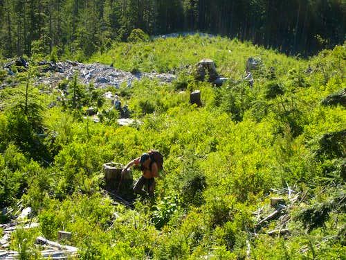 Logging Slash Start.