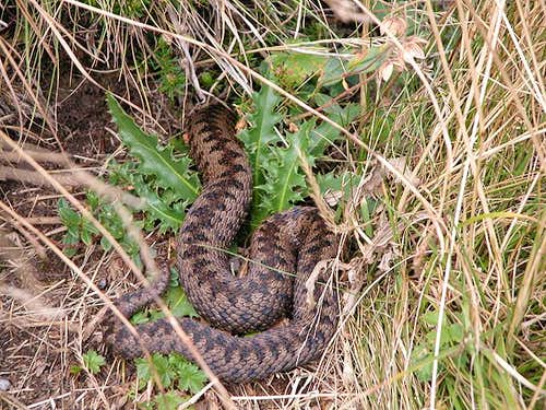 Adder along the way (but...