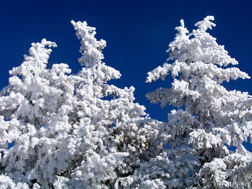 Snow-Covered Trees, Sandia Crest