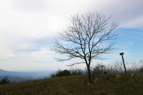 Little Calf Mountain Summit