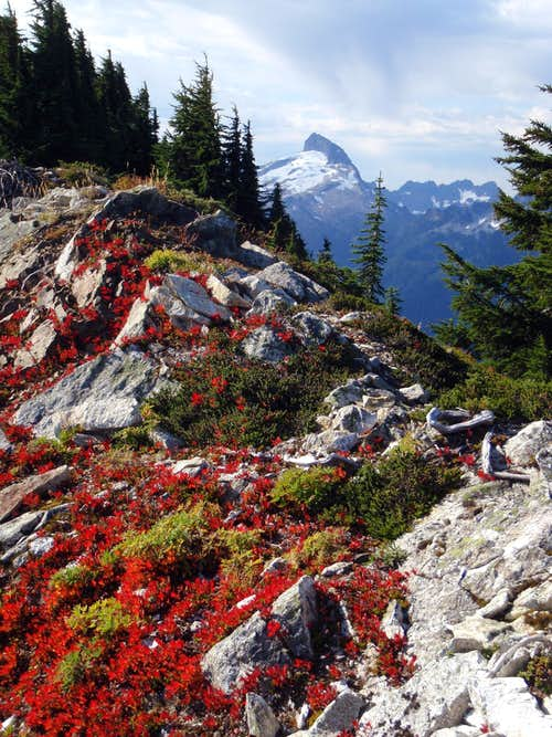 Red Leaves on Breccia