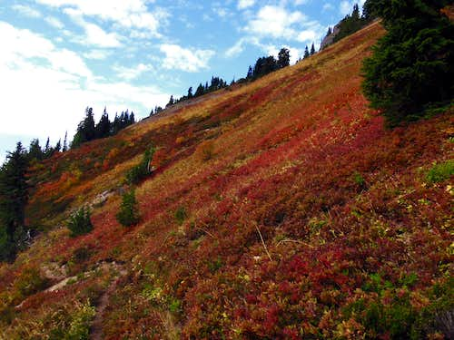 Fall Colors on Lost Ridge