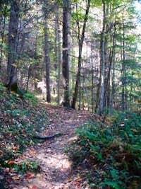 Cove Mountain Trail