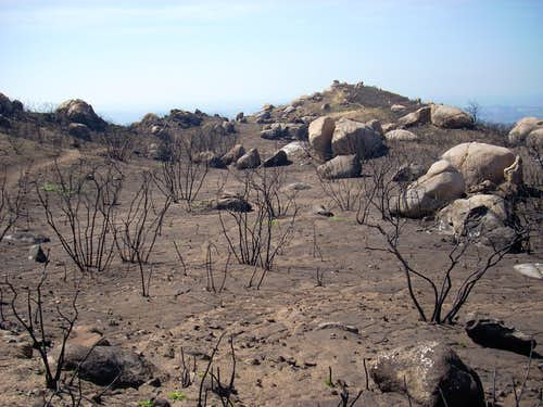 Burnt area