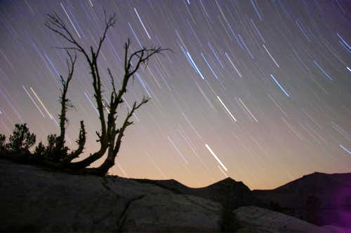 Star trails behind a snag on the John Muir Trail in the Sierras.