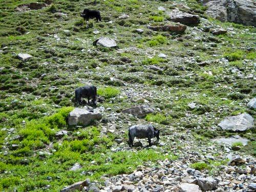 High Pasture of Baltistan