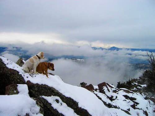 Dogs Raymond and Sopris on...