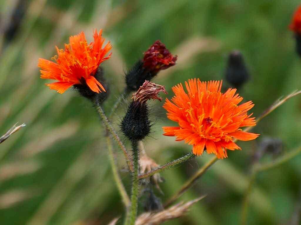 Flowers in Dolina Siedmich Prameňov, <a href=