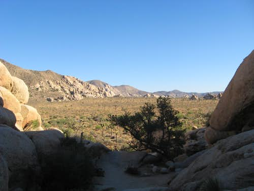 Joshua Tree Wilderness