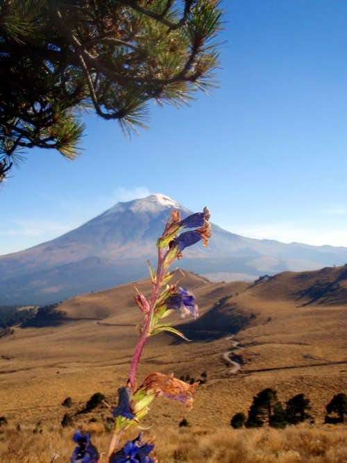 Late fall flowers and Popocatepetl