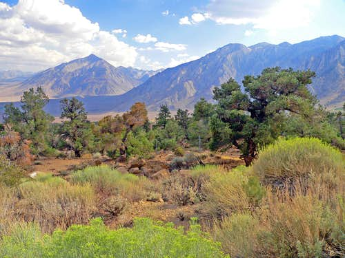 Mt. Tom  and the Wheeler Crest, dropping into Owens Valley