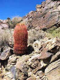 A Lone Barrel Cactus near Skull Rock