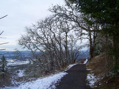 Oak tree along the summit trail