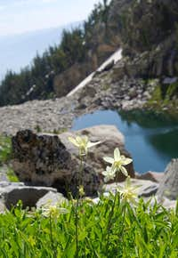 Columbine above Lake of the Crags