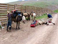 Loading the Mules
