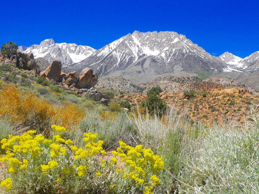 Mt. Humphreys and Basin Mtn. from Buttermilk Country