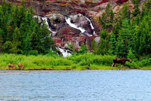 moose near Red Rock Falls