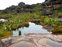 Surface of Roraima