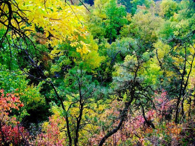 East Ash Creek Foliage
