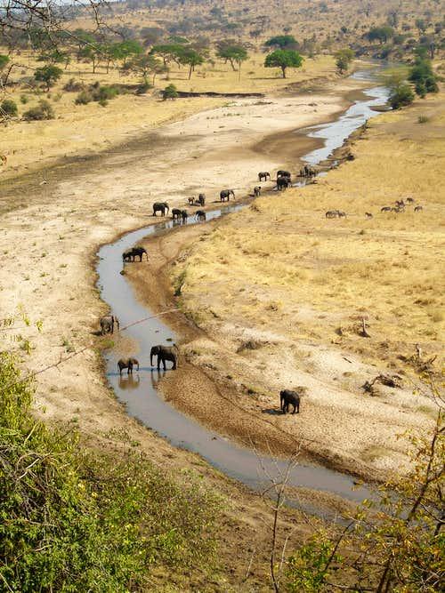 Elephants in Tarangire NP