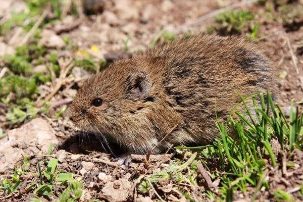 Furry little animals