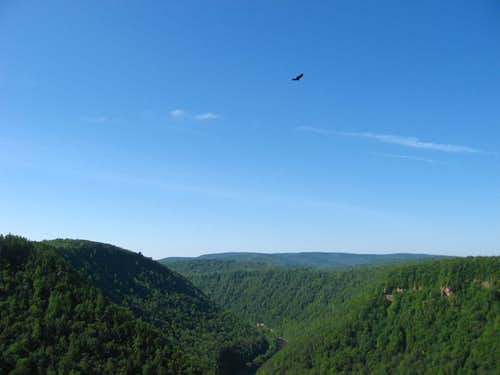 Bird over Pine Creek Gorge