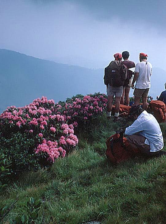 Roan Highlands, NC