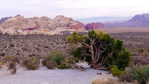 Overlook on Scenic Drive at Red Rock NCA